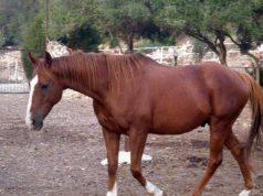 furti cavalli