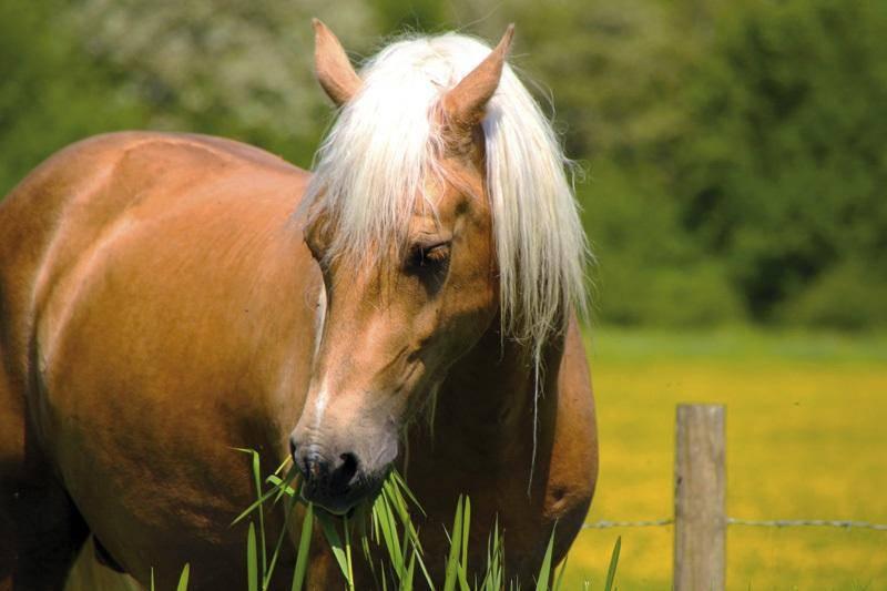 piante tossiche cavalli