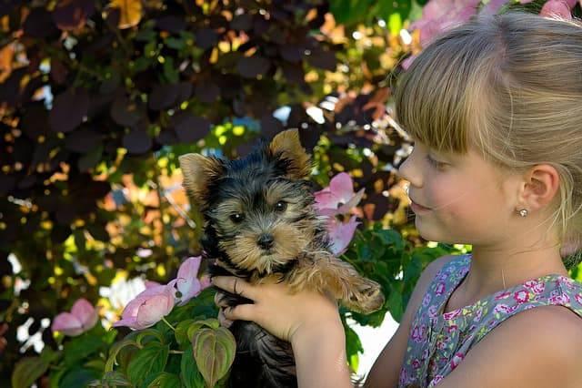 adottare un cucciolo in estate