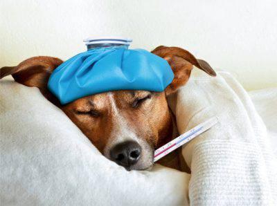 Cane: sintomi colpo calore