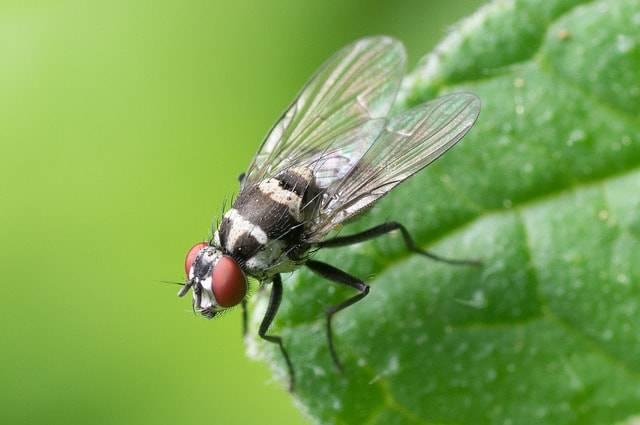 come allontanare le mosche senza ucciderle