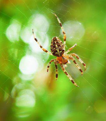 ragno e ragnatela