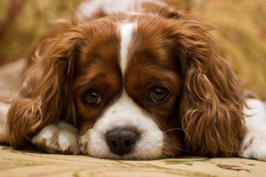 Cucciolo cane solo