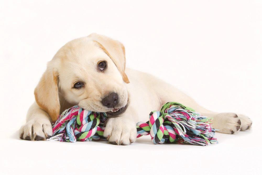 attività ludica cucciolo cane