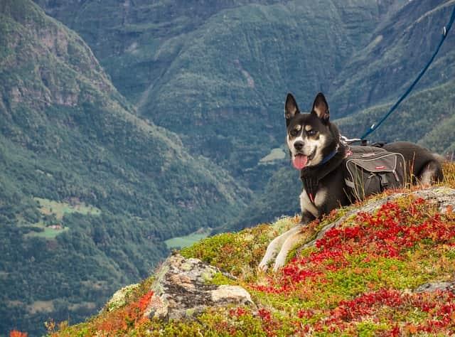 escursioni con il cane trekking