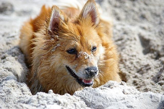 cane mangia la sabbia cosa fare