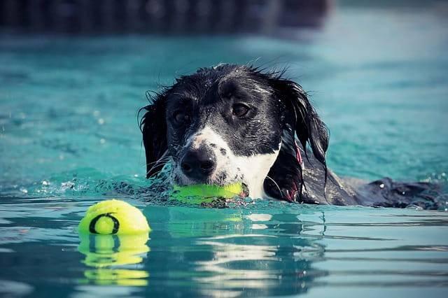 parchi giochi per cani piscina
