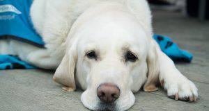 lesioni muscolari cane