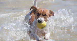 Giochi da fare con il cane all'aperto