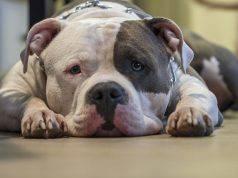 malattie dei muscoli del cane