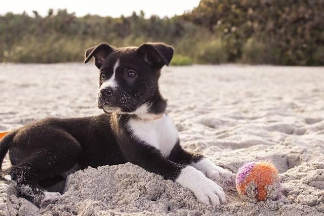 cane mangia la sabbia