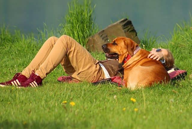 estate con il cane al parco