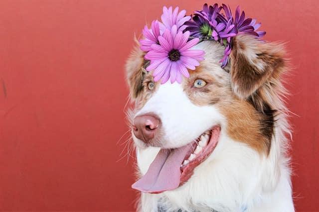 cane fiori matrimonio