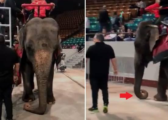 sfruttamento animali circo