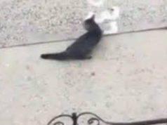 Gatto buttato dal quarto piano