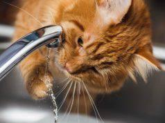 Gatto disidratato