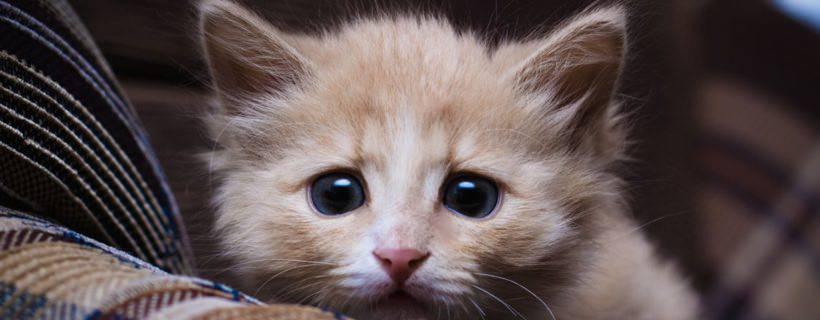 Gatto gettato giù