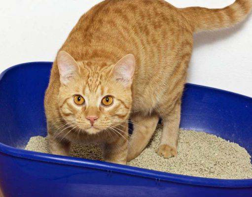 Gatto mangia sabbia