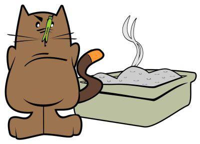 Gatto nasconde feci