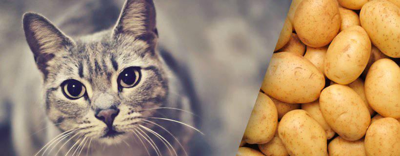 Gatto e patate