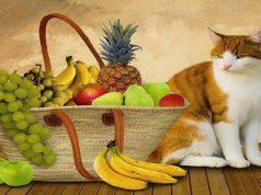 Il gatto mangia frutta e verdura