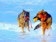cane al mare pericoli