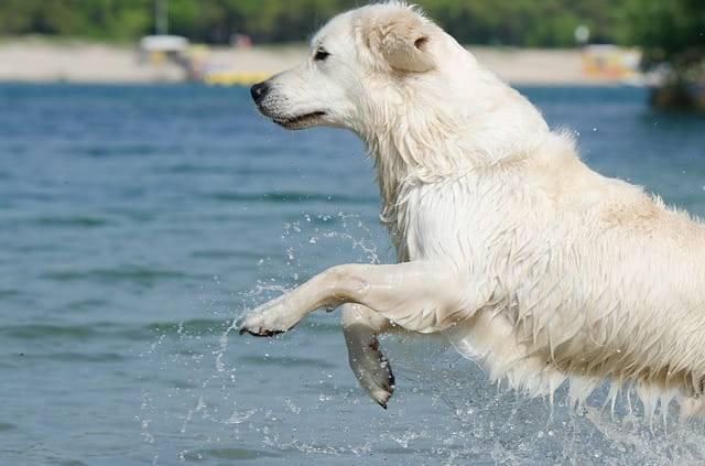 cane bagno mare