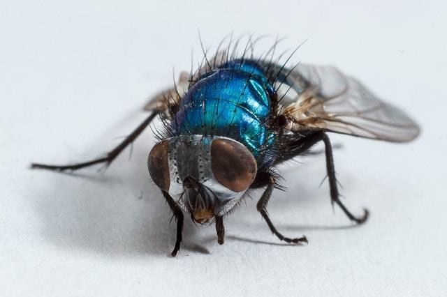 metodi contro le mosche