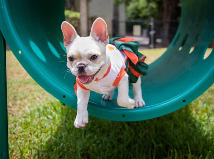 parchi giochi per cani in Italia