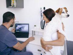 patologie respiratorie cane