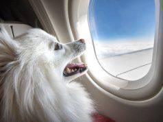 cane all'estero documenti