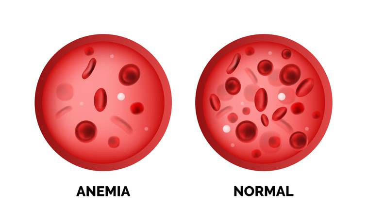 anemia nel gatto globuli rossi