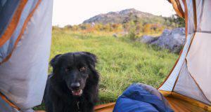 cane in campeggio