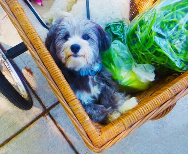 Frutta e verdura per il cane in estate