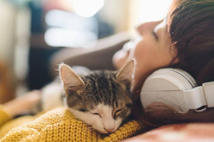 gatti amano la musica