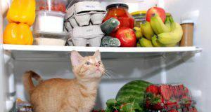 Frutta e verdura per il gatto in estate