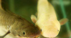 animali marini albini