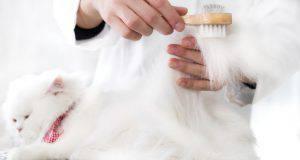 tosare il gatto quando fa caldo