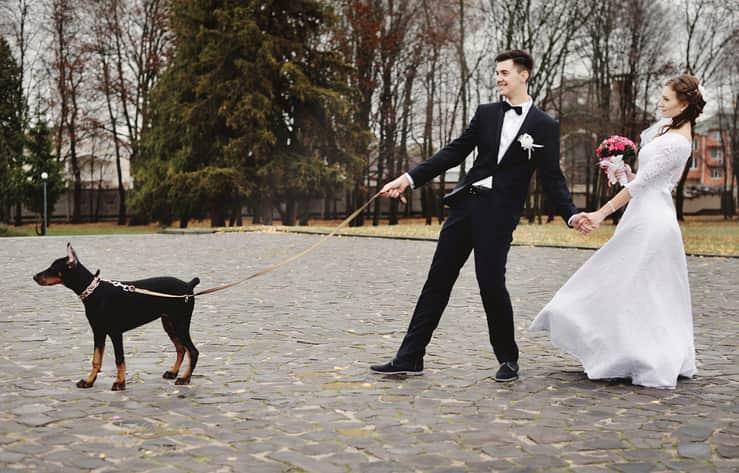 matrimonio con il cane consigli accessori
