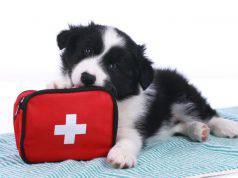 farmaci vacanza cane