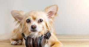 cani amano la musica