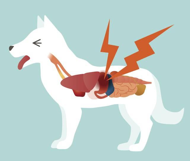 mal di stomaco cane
