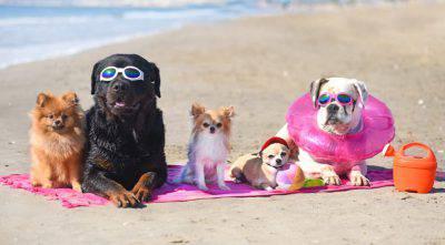 cane in spiaggia consigli