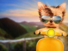 cane in moto