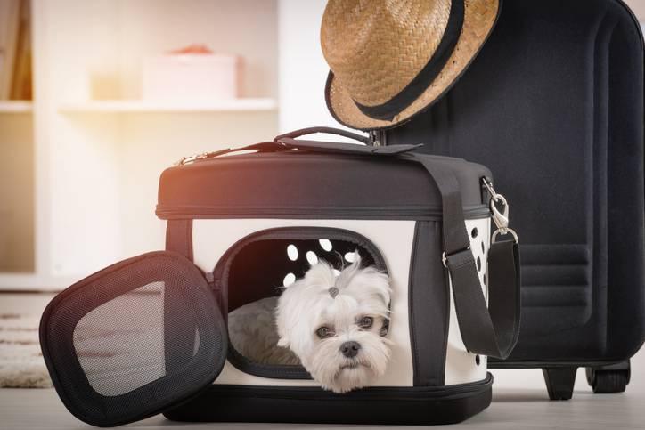 come scegliere il trasportino per cani