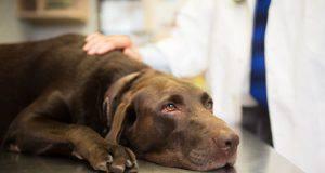 cane anemia