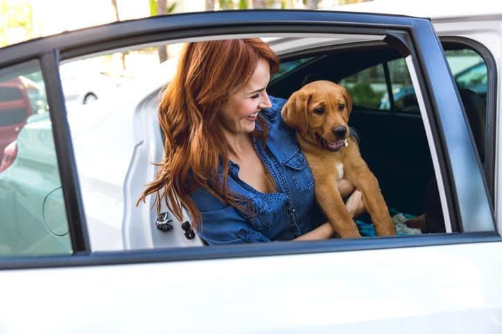 Abituare il cucciolo a viaggiare in macchina