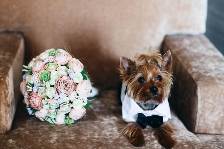 matrimonio con il cane consigli
