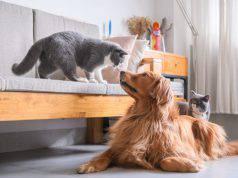assicurazione per cane e gatto