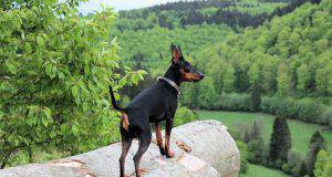 cane in montagna pericoli